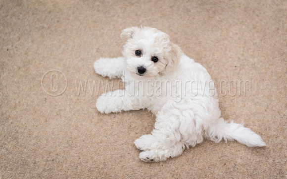 Duncan Grove FRPS Photography | 2017-09-13-Buddy-10-weeks